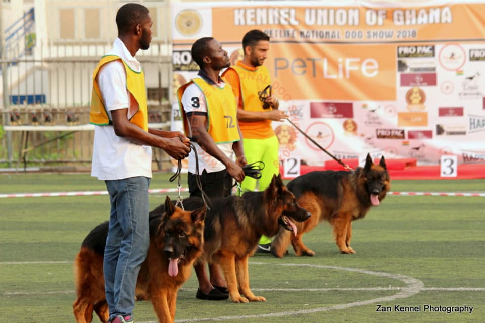 German Shepherd Dog Club Of Ghana – German Shepherd Breeding